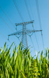 Green energy. Electric line in middle of field Stock Images