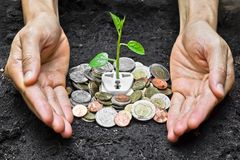 Green energy. Hands holding aTree growing on a socket with coins / green energy / save the world royalty free illustration