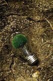 Green energy. Lamp set against the arid soil Stock Photos