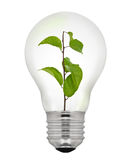 Green Energy Light Bulb Stock Photos