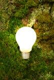 Green energy light bulb. Light bulb getting energy from greenery royalty free stock photos