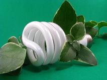 Green Energy Saving Lightbulb Stock Photos