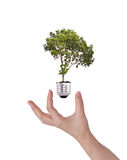 Green energy symbol : Light bulb with tree Royalty Free Stock Photos