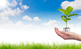 Green energy symbol over blue sky. Light bulb with tree Stock Image