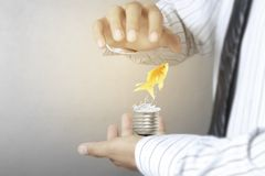Green energy symbols ecology, light bulb in hand. Green energy symbols ecology, light bulb in a hand Stock Photography