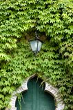 Green Entry. An old entry way covered with ivy. only the old lamp stands out stock images