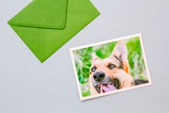 Green envelope with a printed photo of a German Shepherd dog. Green envelope with printed photograph of a cute German shepherd dog portrait on a light blue stock photography