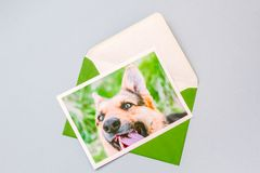 Green envelope with a printed photo of a German Shepherd dog. Green envelope with printed photograph of a cute German shepherd dog portrait on a light blue royalty free stock image