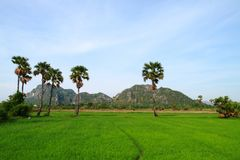 Green environment. This picture contain green rice field with palm trees and the big mountain. Green Environment available in Thailand Royalty Free Stock Photography