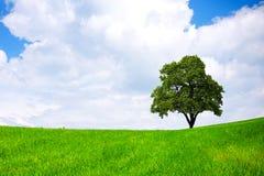 Green environment Royalty Free Stock Image