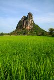 Green environment available in Thailand. This picture contain green rice field and the big mountain. Green environment available in Thailand Stock Photos