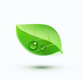 Green environment concept icon Royalty Free Stock Images