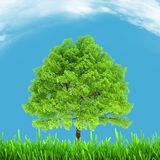 Green environment and tree on blue sky Royalty Free Stock Photos