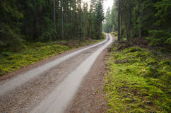 Green environment with a winding gravel road Royalty Free Stock Photos