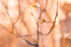 Green escape on a branch. royalty free stock photos