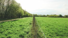 Green European meadow, divided by wire stock photography