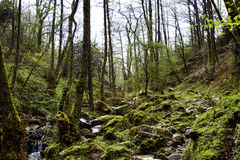 The Green Euskadi. Beautiful forest with a river and green wet moss in Euskadi on a rainy April Royalty Free Stock Photo