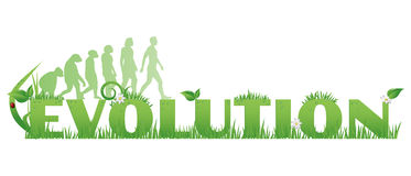 Green Evolution. /Evolution text decorated with,flowers,water drops,ladybug and ape to man silhouettes   on white Stock Photos