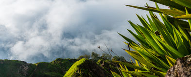 Green exotic palm tree plant above clouds up in Stock Photo