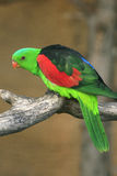 Green exotic parrot Royalty Free Stock Image