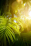 Green exotic tropical leaves background Royalty Free Stock Image