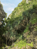 Green and exotic vegetation, Haad Yao beach, Trang, Thailand Royalty Free Stock Images