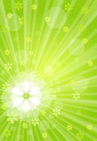 Green explosion Royalty Free Stock Photos