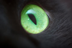 Green eye. Green eye of a black cat.Small depth of sharpness Stock Photography