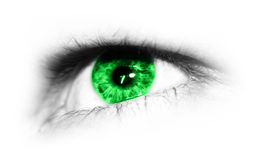 Green eye. Detailed close-up view of the human eye Royalty Free Stock Photography