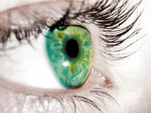 Free Green Eye Stock Image - 20089471