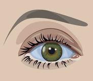 Green eye. Close up. Vector illustration Stock Photography