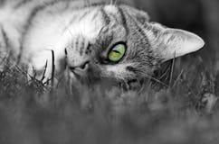 Green eye. The green eye of a tabby cat Royalty Free Stock Photo