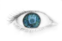 Green eye. Isolated on white background Stock Image