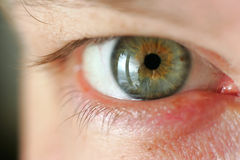 Green eye. A large kind Stock Images