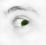 Green eye Stock Image