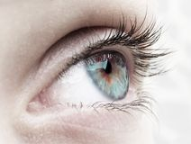 Green eye. Woman eye...girl eye beautiful Royalty Free Stock Photography