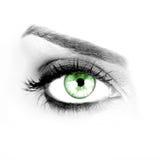 Green eye. Macro shot of a woman's green eye Stock Image