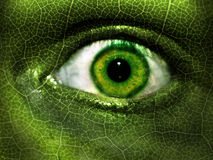 Green Eye Camouflage royalty free stock photography