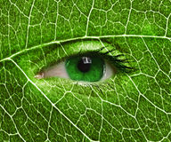 Green eye close up and leaf texture. Stock Images