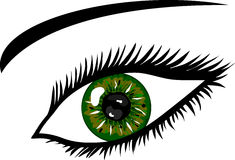 Green Eye with lashes Royalty Free Stock Photography