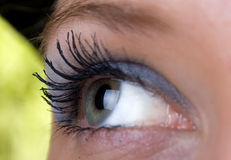 Green eye Macro Stock Photo