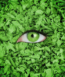 Green eye in the middle of leaves Royalty Free Stock Photo
