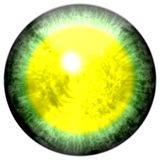 Green eye with open pupil and bright yellow retina in background. Dark colorful iris around pupil,  isolated  eye. Stock Photos