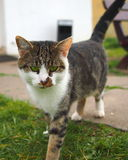Green eye tabby cat. Looking into the camera Stock Photos