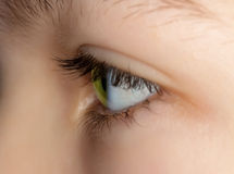 Green eye of a young girl Stock Image