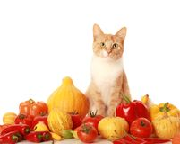 Green-eyed cat Stock Images