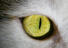 Green-eyed cat. Green eye of a cat close-up stock photos