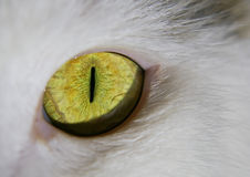 Green-eyed cat. Green eye of a cat close-up royalty free stock photos