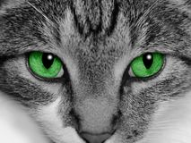 Free Green Eyed Cat Stock Images - 9984534