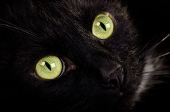 Green-eyed cat face close up Stock Images
